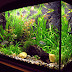 Aquarium is a water-filled tank in which fish swim about