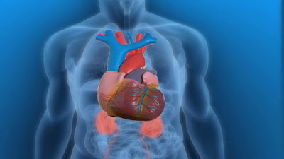 jantung, penyakit jantung, kesehatan jantung, jantung sehat, menjaga kesehatan jantung, infark miokard, serangan jantung, myocardial infarction