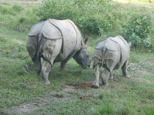 Picture of mother and baby rhino.