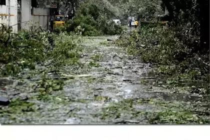 Make Chennai Green: Let's Give Back her Blanket