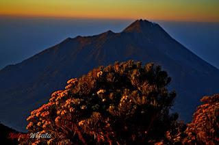Edelways Gunung Merbabu dan Gagahnya Puncak Gunung Merapi