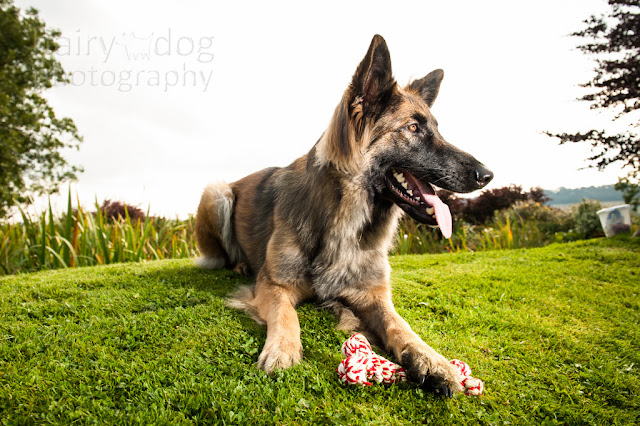 GSD photograph by Haiy Dog, Aberdeen photographer