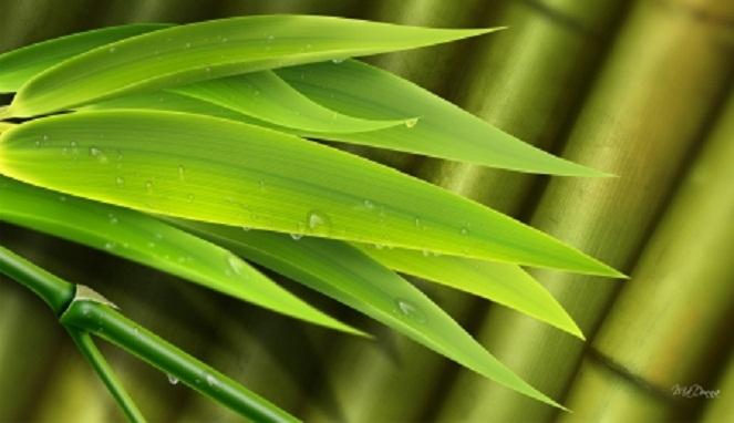 8 Manfaat Hebat Daun Bambu Bagi Kesehatan Tubuh
