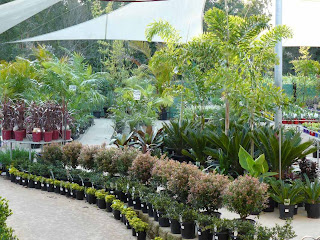 starting a small plant nursery business plans