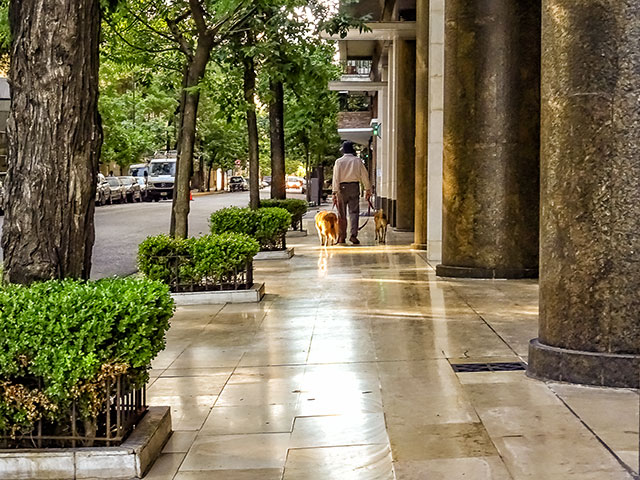 De espaldas un hombre camina con dos perros a su lado.