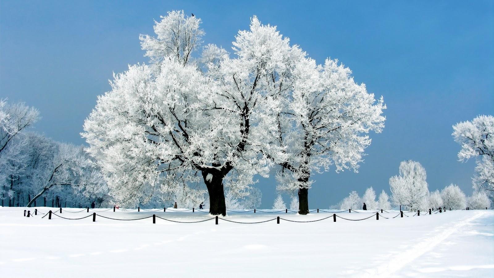s1600 winter achtergronden winter - photo #19