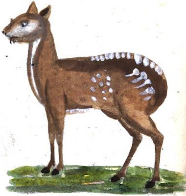 Μόσχος: Moschus moschiferus