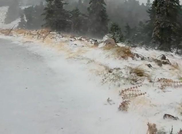 Ισχυροί άνεμοι και το πυκνό χιόνι στο Παρνασσό (βίντεο)
