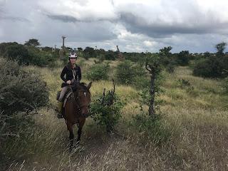 Ratsastussafari, Riitta Reissaa, Horsexplore, Botswana, ratsastusmatkailu