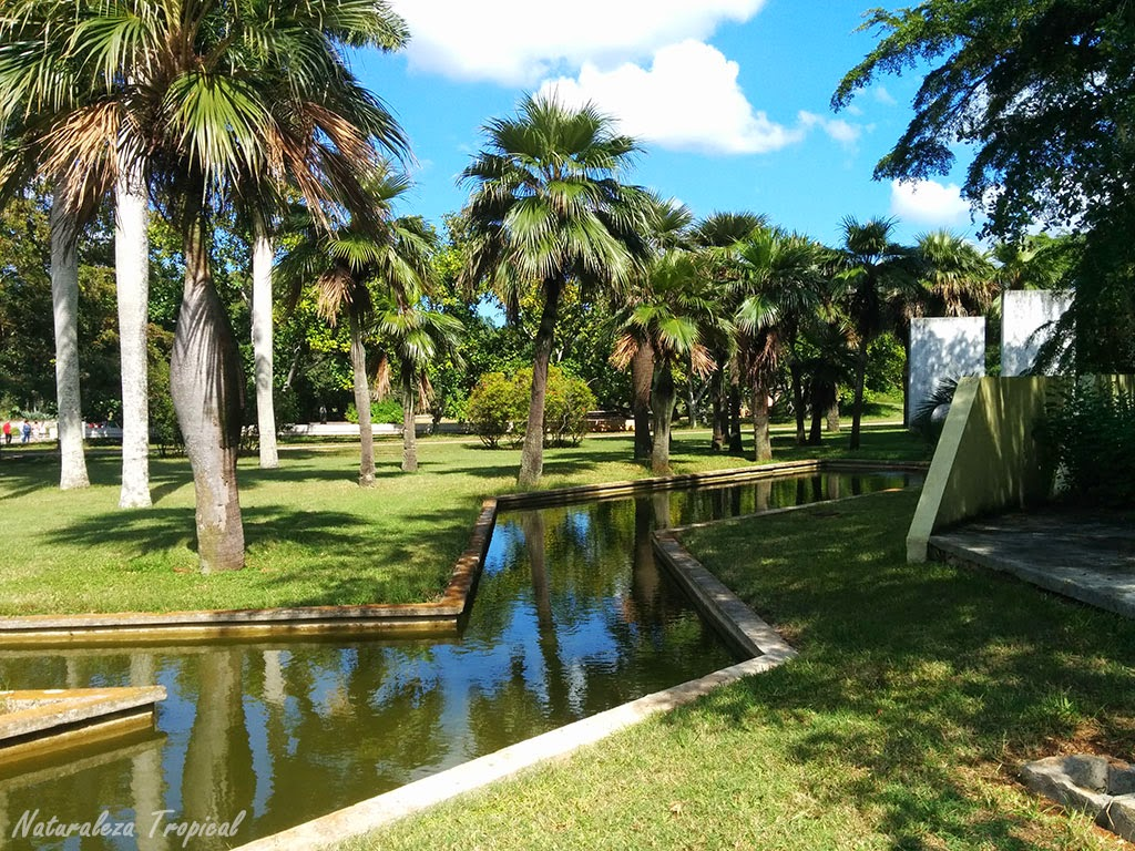 Área dedicada a la siembra y mantenimiento de palmas (palmetum), Jardín Botánico Nacional de Cuba