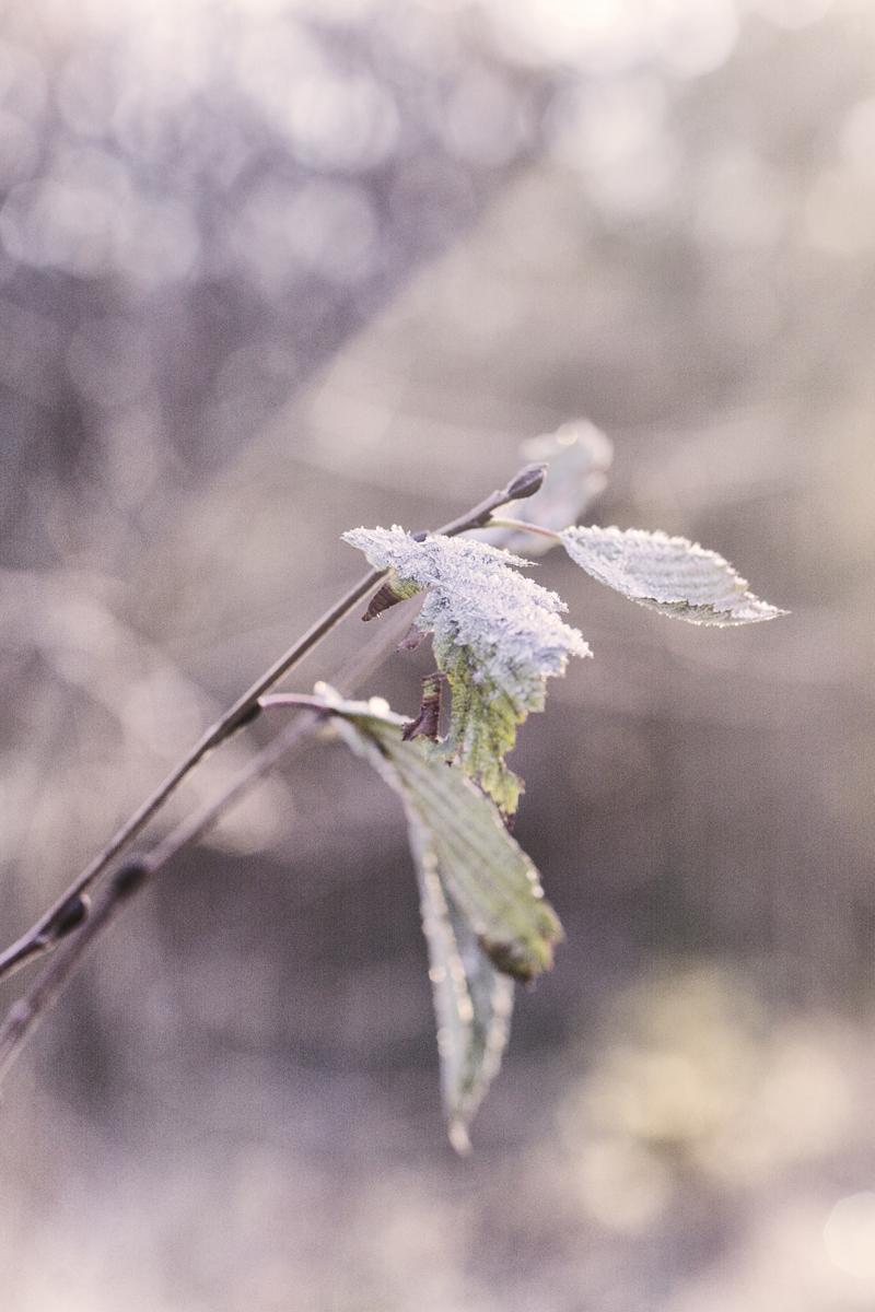 kuura, pakkanen, pakkasaamu, Visualaddict, valokuvaaja, Frida Steiner, luontokuva, luontovalokuvaus, nature, frost, winter, morning, aamu, talviaamu, naturephotography, finland, suomi, finlandphotolovers, nordic, scandinavia
