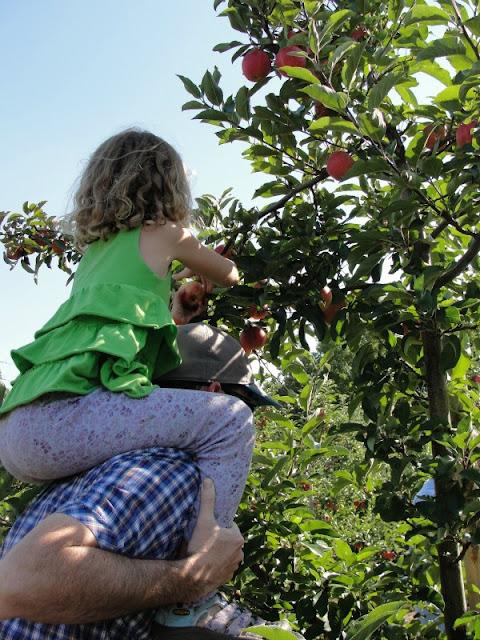 kid picking apples