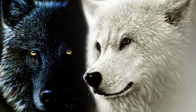 H Παραβολή Των Δυο Λύκων