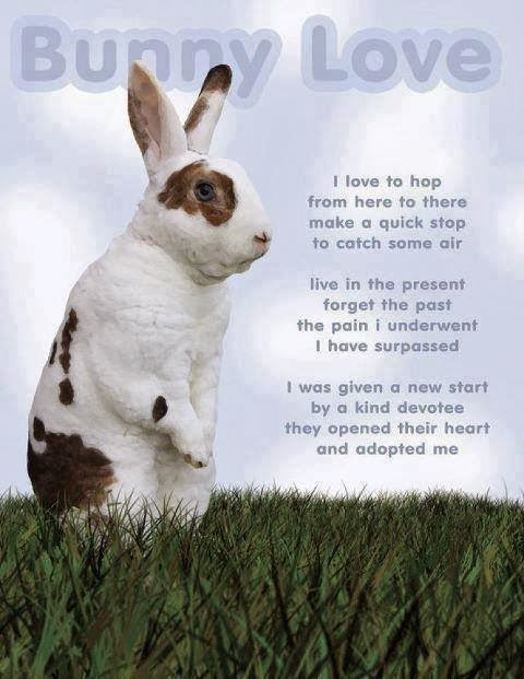 Quotes About Rabbits: Bunny Rabbit Quotes. QuotesGram