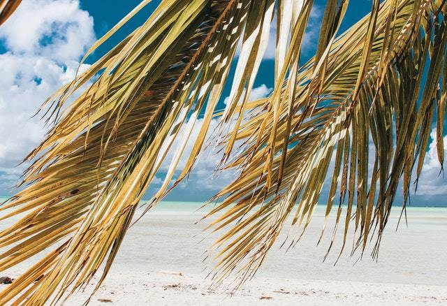 Palm trees in a beach in the Caribbean