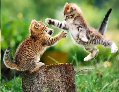 RABBI ARTHUR SEGAL:ECO-JUDAISM: PEREK SHIRA: CAT: RABBI