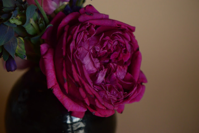 rose, william shakespeare 2000, david austin, monday vase meme, sweet peas, cerinthe, salvia, small sunny garden, desert garden, arizona garden, amy myers
