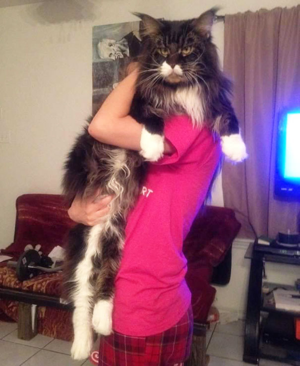 huge-cats and beaufigul girl
