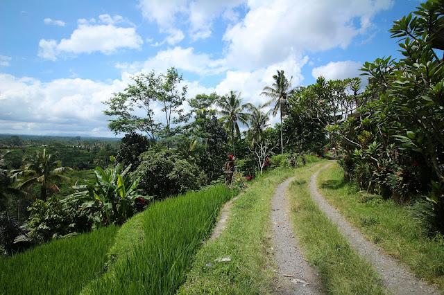 Chemin le long des rizières
