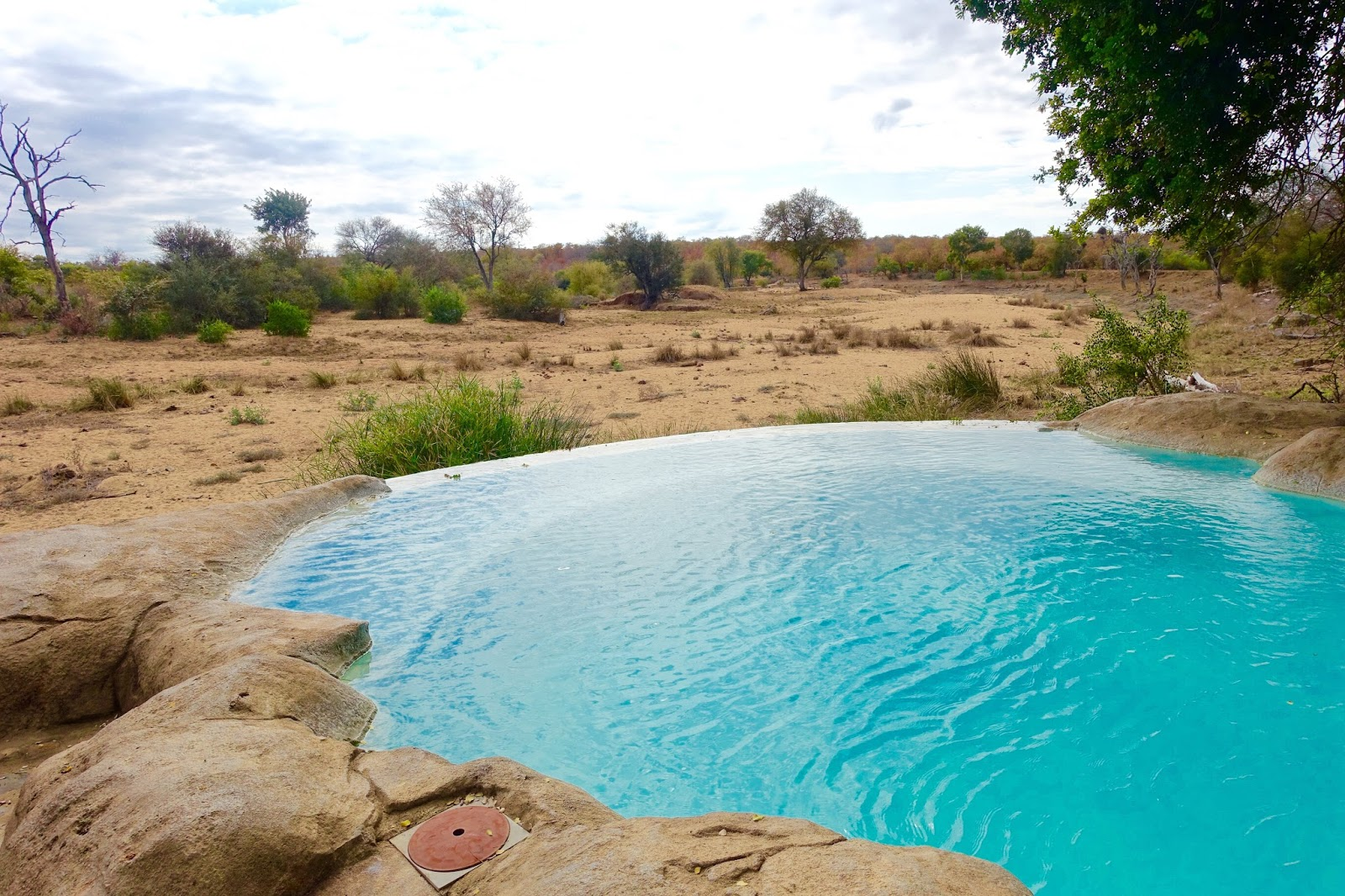 infinity pool at motswari private game reserve