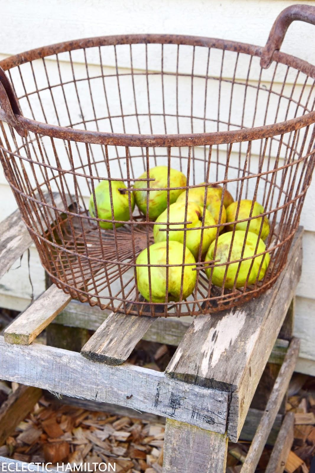 Äpfel sammeln leicht gemacht mit dem Rollsammler! Spätsommer, Herbst, Rücken, Rückenschonend, Tipps, Ratgeber, pflücken