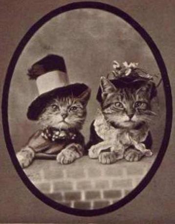 Vintage Cat 22