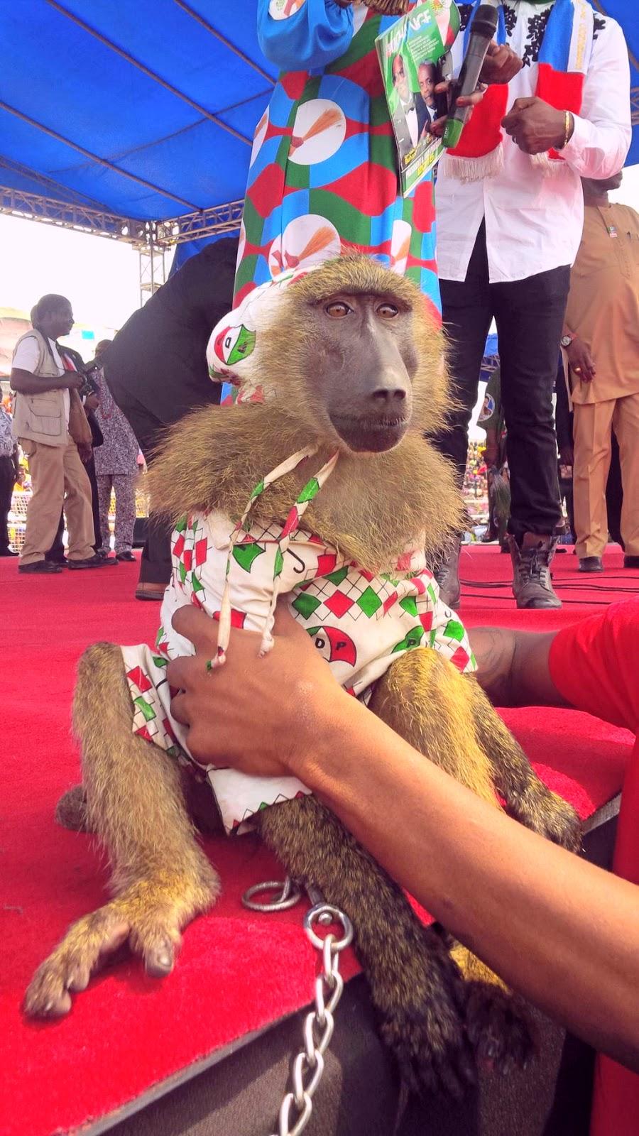pdp monkey apc rally