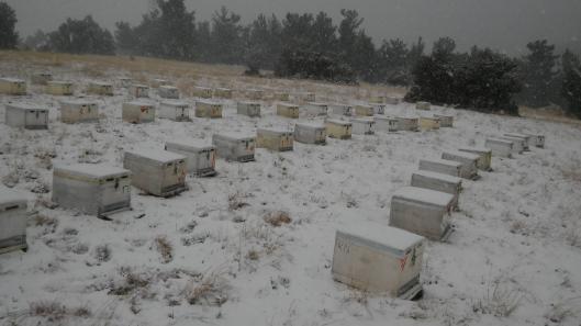Τα μελισσάκια του Κωνσταντίνου Ντάλλα