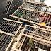 Realizan tres allanamientos por tenencia y venta ilegal de aves silvestres en Roca