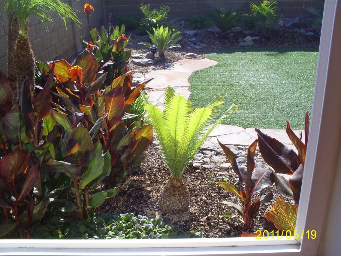Tropical Backyard Plants   Outdoor Goods