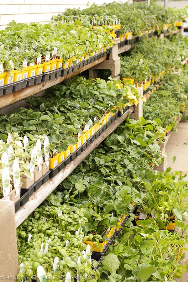 buying garden veggies and herbs at True Value