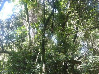 Floresta Projeto de Preservação do Cerrado e da Amazônia Legal