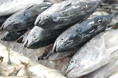 Tips Memilih Ikan Segar dari Detailnya