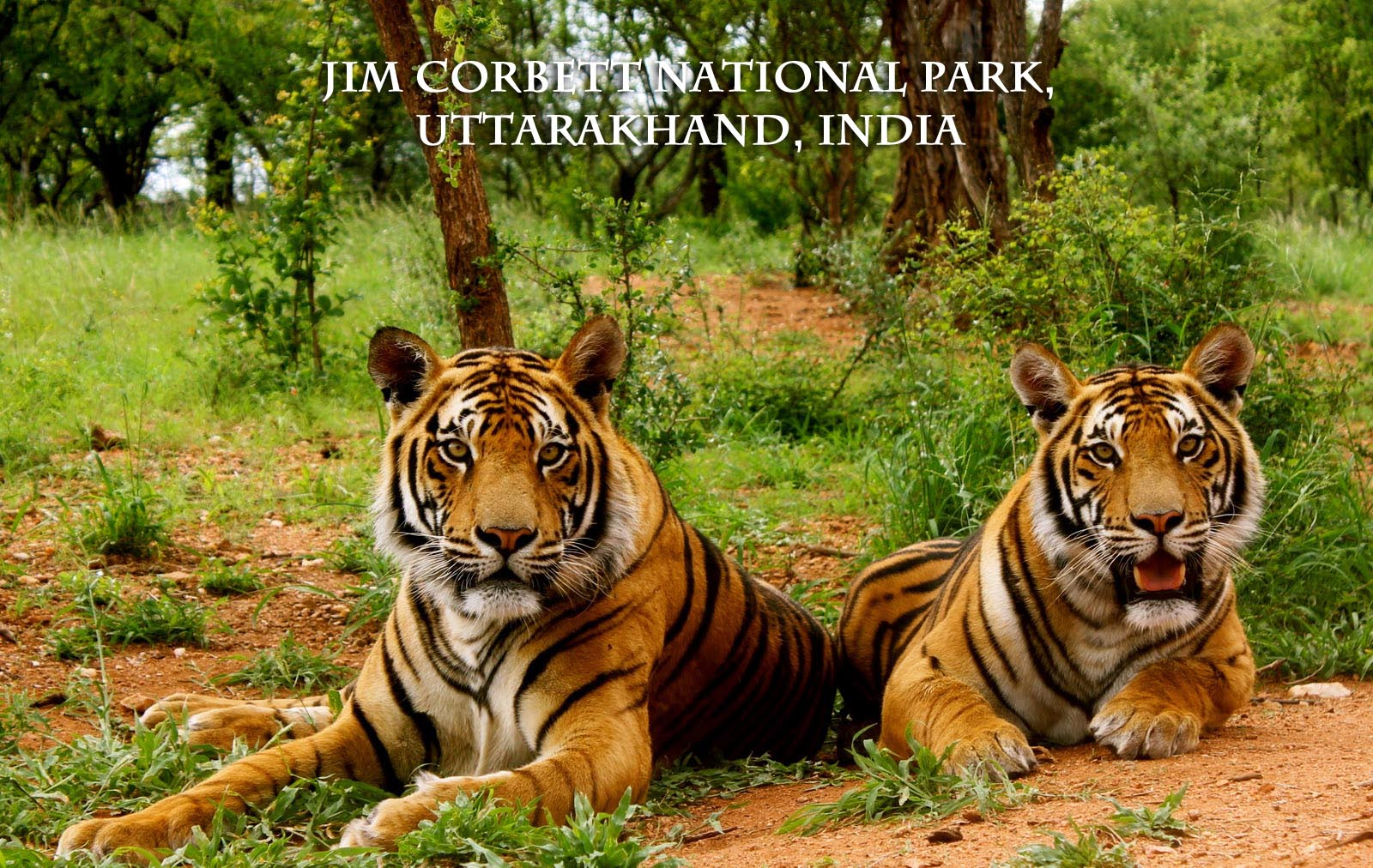 jim corbett national park beautiful places. Black Bedroom Furniture Sets. Home Design Ideas