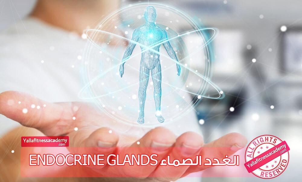 الغدد الصماء Endocrine Glands
