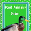 God Makes the Pond Animals: Ducks