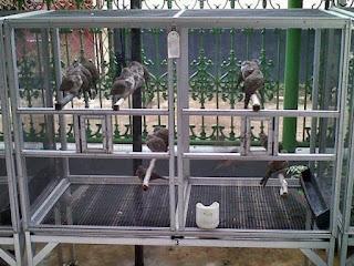 kandang perkutut - agungjakanugraha.blogspot.com