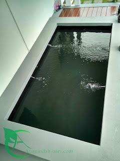 kolam koi - kolam minimalis - kolam koi minimalis