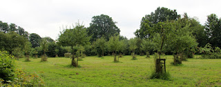 A large orchard - I am jealous