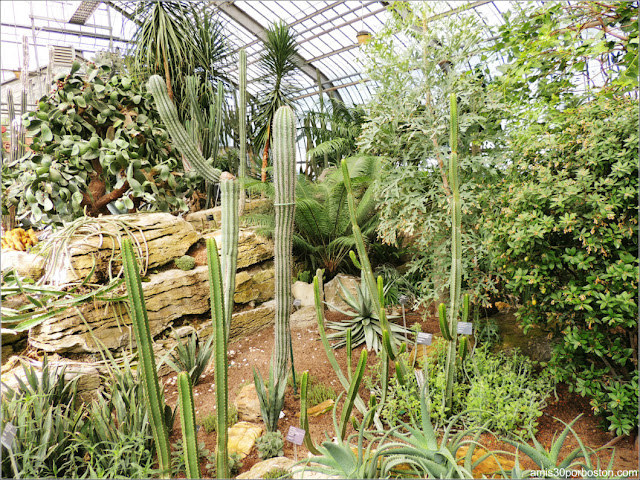 Arid Regions del Jardín Botánico de Montreal