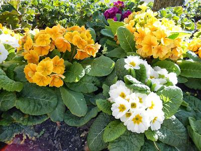 spiritual rebirth, spiritual awakening, spirituality flowers, blooming