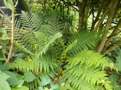 Mystery fern Mystery plants Green Fingered Blog
