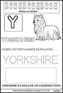 Bichonário desenho de yorkshire