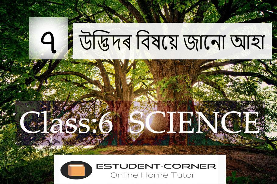 উদ্ভিদৰ বিষয়ে জানো আহা, Lesson 7, Class 6, Science, Assamese Solutions, SCERT