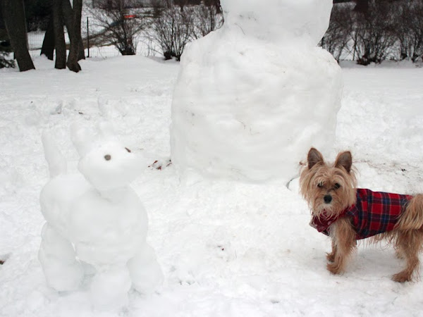 How to: Keep Your Pet Safe This Winter
