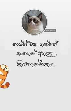 http://www.download.aluth.com/2015/11/angry-cat-fun-wallpaper-90-kb.html