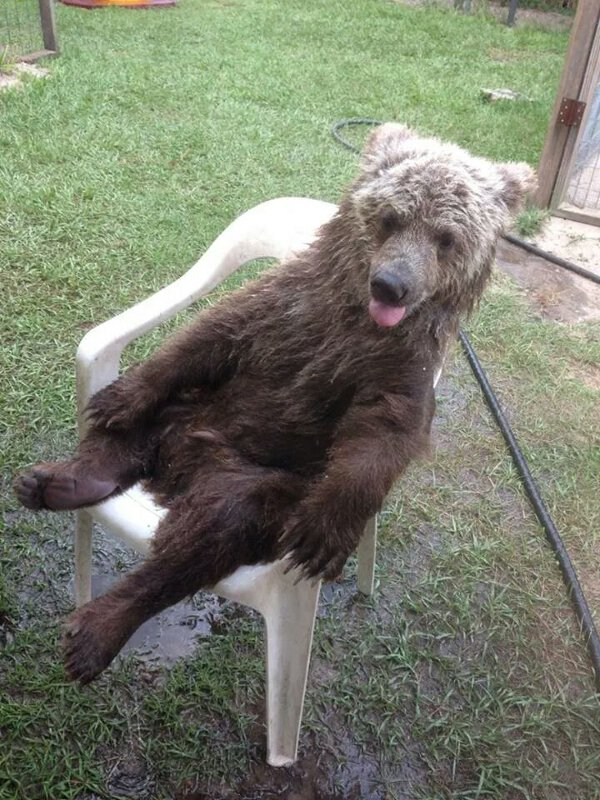 Funny animals of the week - 4 August 2017, cute animal image, best cute animals