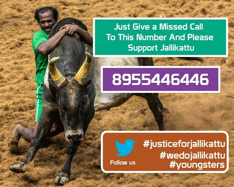 We Support Jalikattu