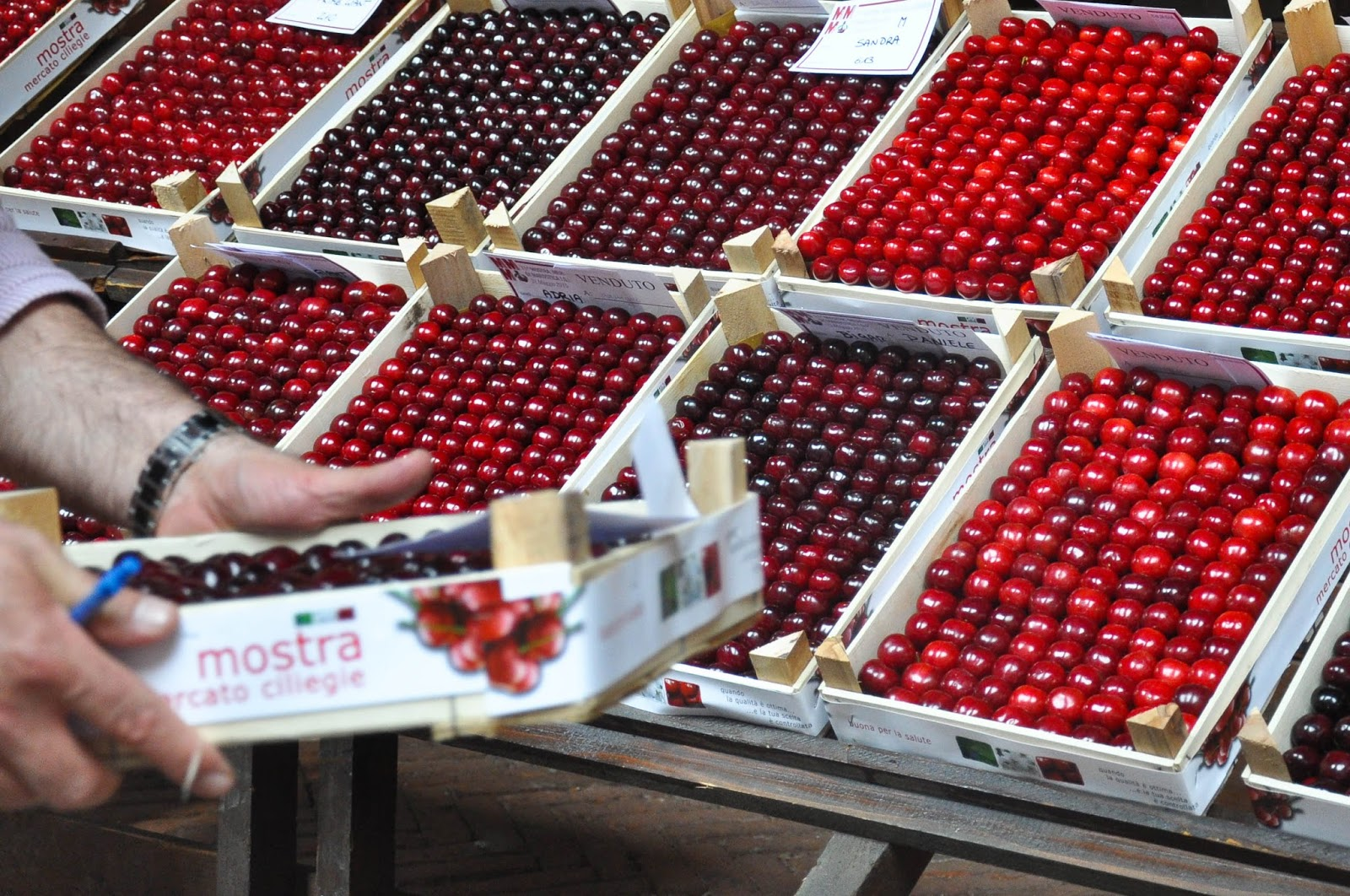 Another one sold, Crates of Premier Cherries, Cherry Show Market, Marostica, Veneto, Italy