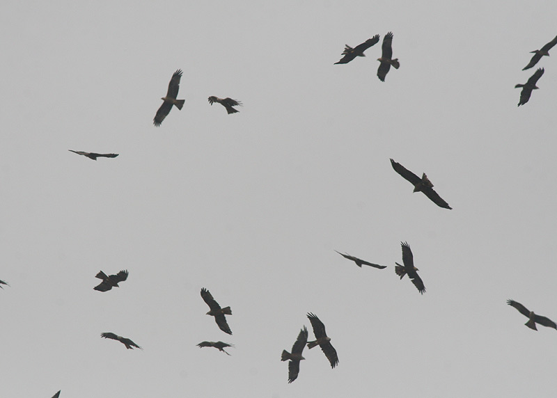 Early Migration over the Parched Earth